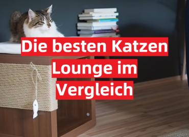 Katzen Lounge Test 2021: Die besten 5 Katzen Lounge im Vergleich