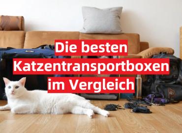 Katzentransportbox Test 2021: Die besten 5 Katzentransportboxen im Vergleich
