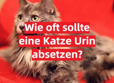 Wie oft sollte eine Katze Urin absetzen